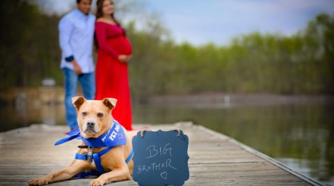 maternity-photography-with-dog